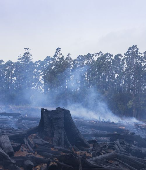 Bushfire disaster in Australia