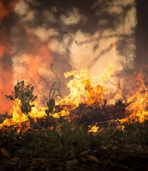 Bushfire disaster in Australia